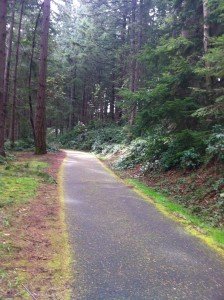 Bike Path Landscape